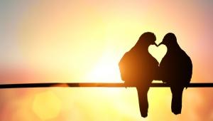 romantik tauben