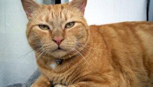 grumpy-kitty-1474512